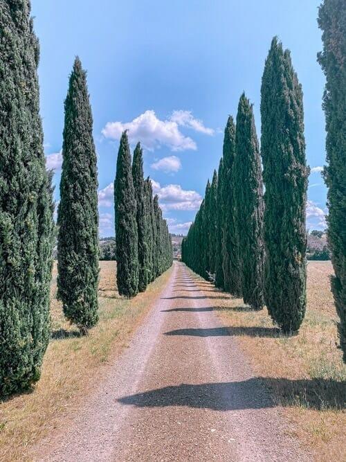 8 reasons why you should visit Tuscany, Italy 11